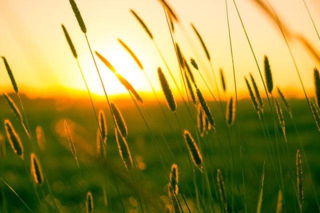 summer-sun-yellow-photography